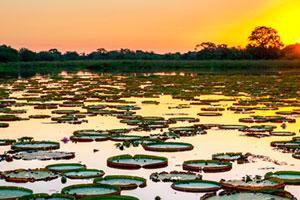 Como ir de Vale dos Sonhos para o Pantanal brazil trip pacotes pantanal pacote de viagem para bonito e pantanal pantanal jungle lodge viagem pantanal dicas melhores pousadas pantanal pacotes viagem pantanal bonito passeios safari pescaria discovery turismo cuiaba pocone corumba miranda passo do lontra xaraes jungle lodge
